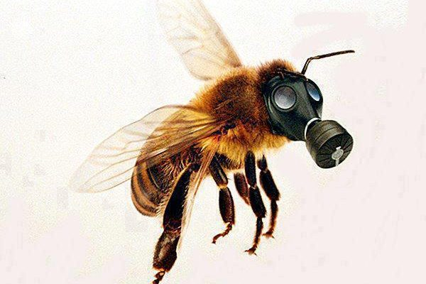 extincion de abejas