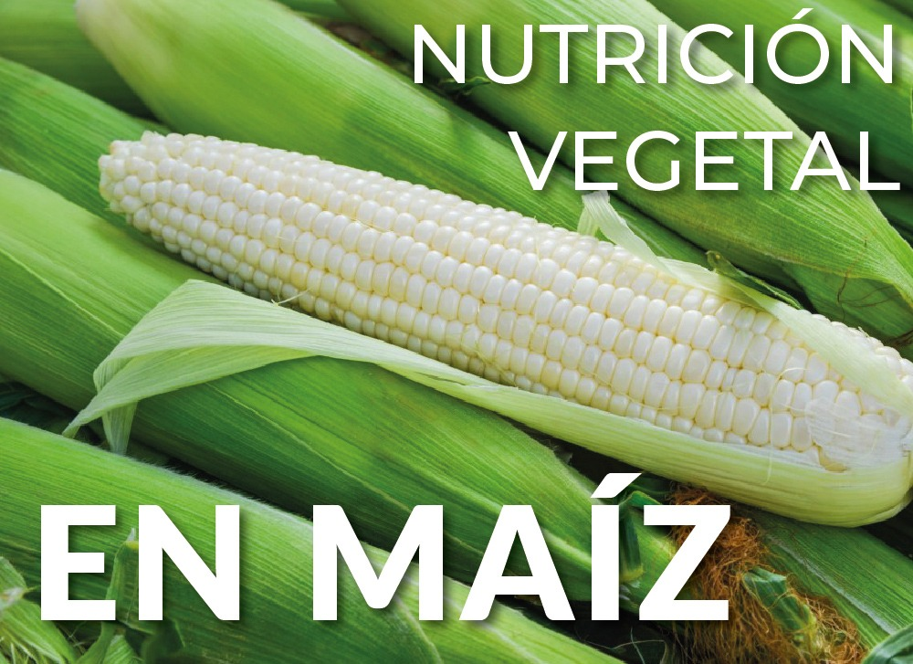 Nutrición Vegetal en Maíz