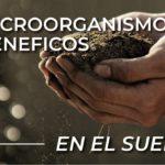 Microorganismos Beneficos en el suelo