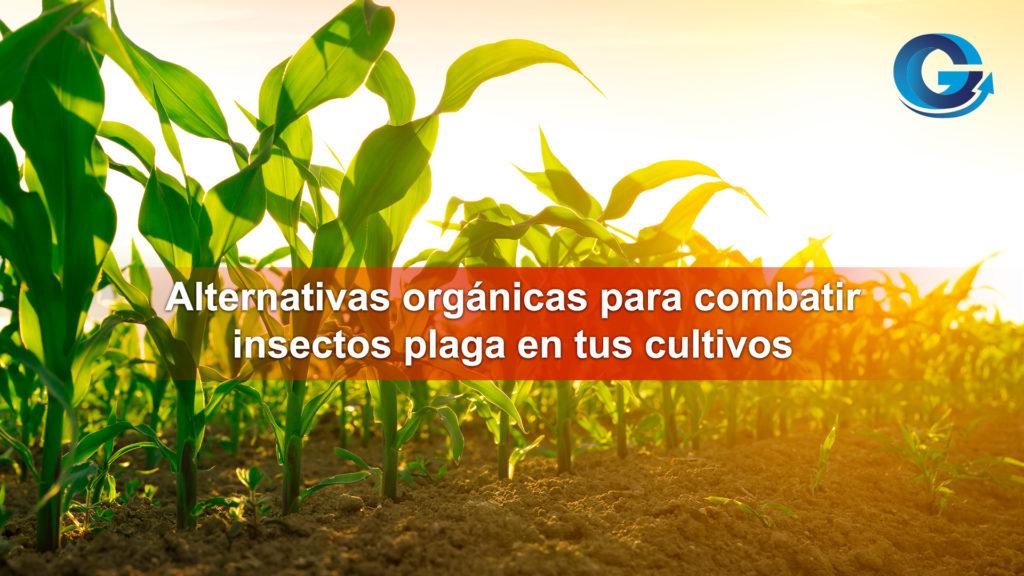 Alternativas orgánicas para combatir plagas en tus cultivos