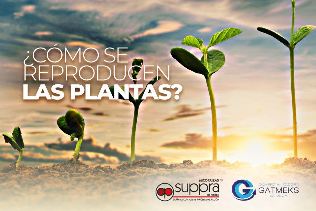 ¿Cómo se reproducen las plantas?